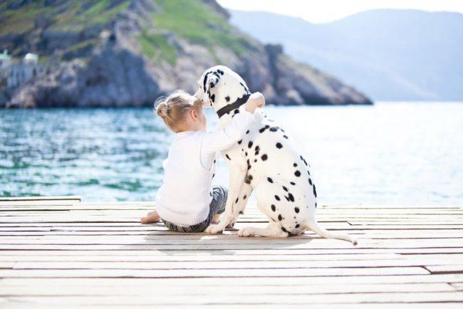 Практически каждый ребенок задавался вопросом: как уговорить родителей купить собаку? Действуй советам из этой статьи, и все получится!
