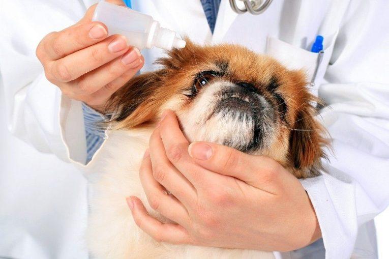 Как лечить катаракту народными средствами у собак