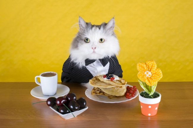 Вопросы: чем кормить своих пушистиков, какое лакомство можно давать, какой корм для кошек лучше выбрать - мучают владельцев четверолапых друзей ежедневно. В этой статье отвечаем на все вопросы