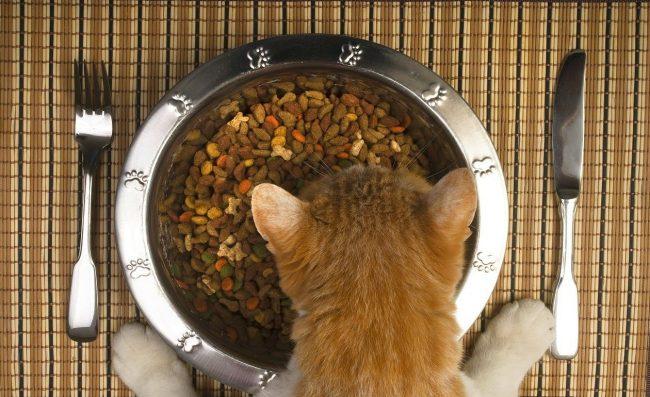 Сухие корма для кошек премиум и супер премиум класса