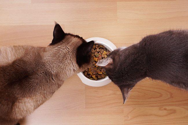 Владельцы опасаются давать сухой корм своим любимцам через риск появления камней в мочевыводящих путях. Но совершенно напрасно. Производителям удалось создать формулу сухого корма, которая приблизилась к идеальному рациону кошки