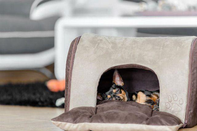Карликовый пинчер не требует много места, ему будет достаточно компактного домика для сна