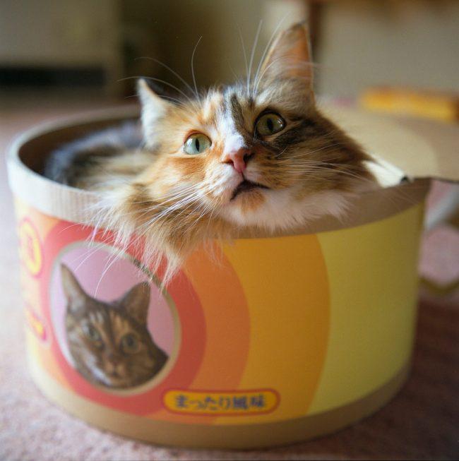 В отличие от других пород, норвежская лесная кошка совершенно не любит ласки. Ей достаточно просто сидеть у хозяина на коленях. Лишь от этого она будет получать удовольствие