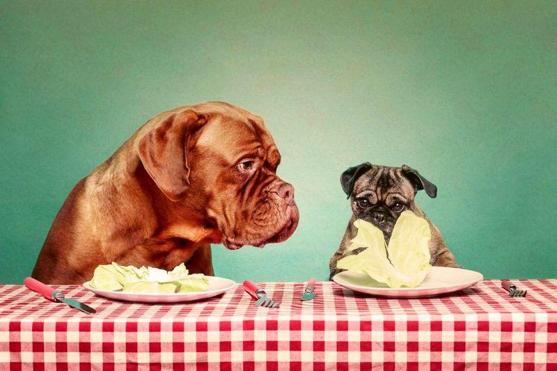 Панкреатит у собак - симптомы и лечение, корм при панкреатите