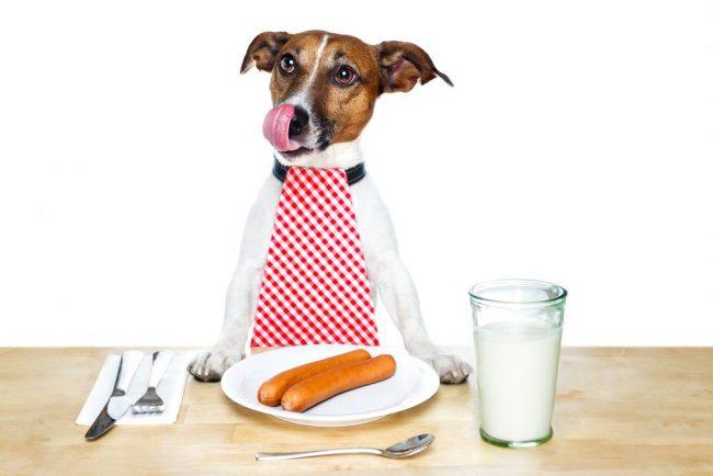 Специалисты не устают повторять: не давайте вашим питомцам острую и копченую пищу, это способствует развитию панкреатита у собак