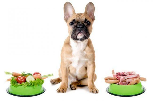 При панкреатите собаке следует соблюдать специальную диету