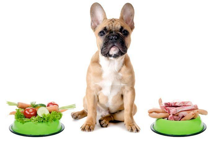 как вылечить панкреатит у собаки: