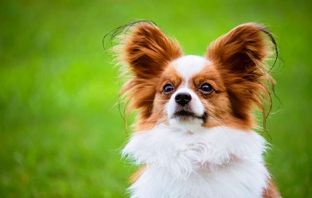 аллергия на собак симптомы на глазах