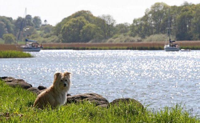 Главные черты характера собаки - отважность и чуткость, это верный друг, способный поддержать в трудные минуты и вдоволь повеселиться в минуты радости