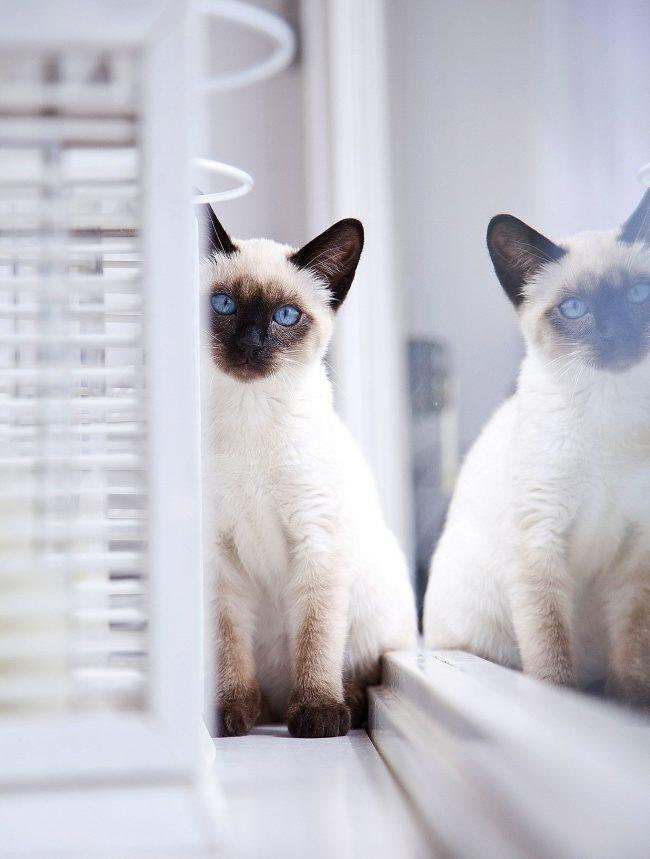 С тайской кошкой, бесплатный экзотический массаж будет обеспечен