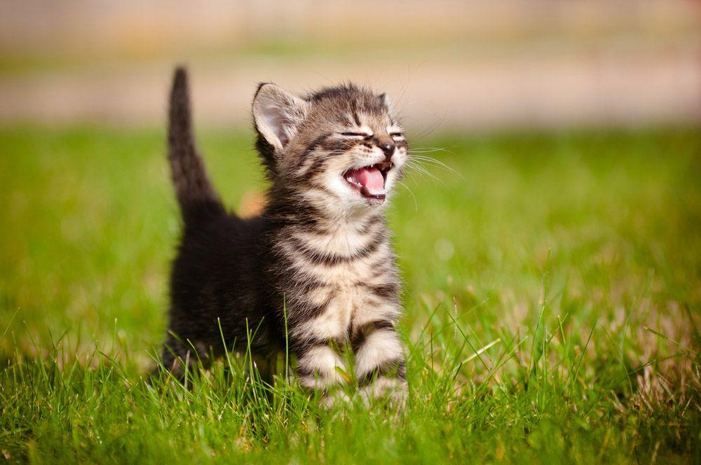 Когда котенку делать первые прививки и какие цена - d3a53