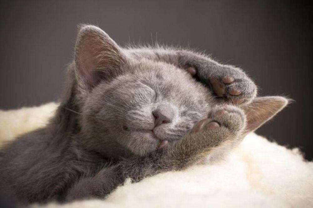 Для поздравления, смешные картинки с котиками спокойной ночи