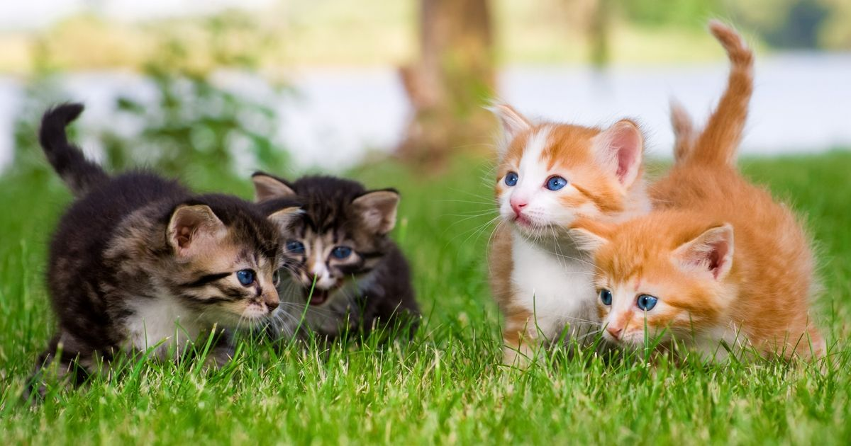 Когда котенку делать первые прививки и какие цена - 8ee