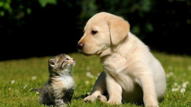 До вакцинации нельзя позволять щенку общаться с другими питомцами