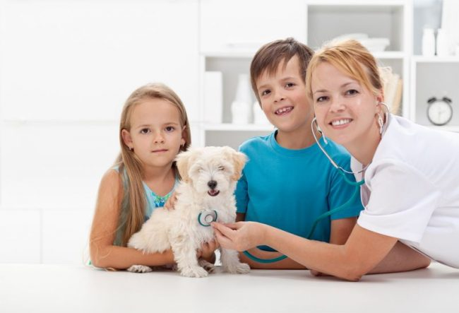 Прививки щенкам нужны для того, чтобы защитить их организм от болезней