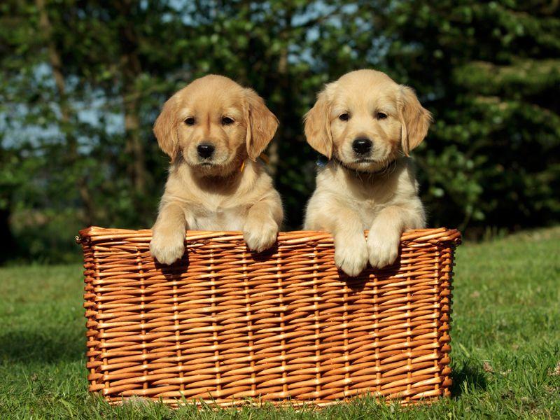 Первая и вторая прививка щенкам до года: схема
