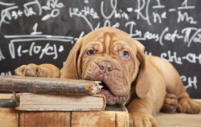 Прежде, чем грызть гранит науки, щенку нужно сделать прививки