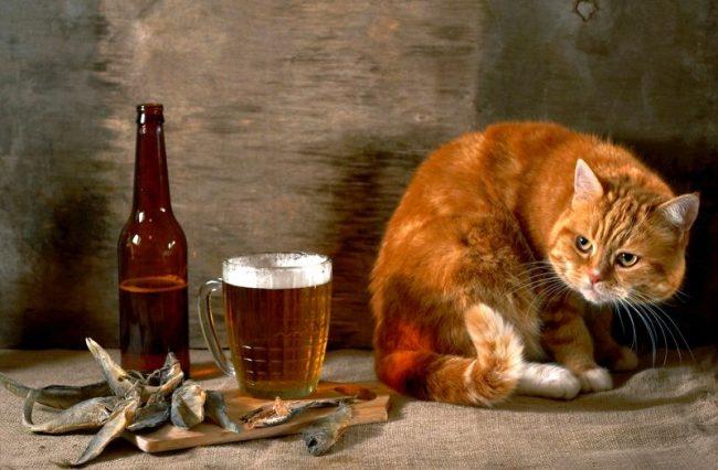 Кто-то находит в рыжих котах приятных собеседников