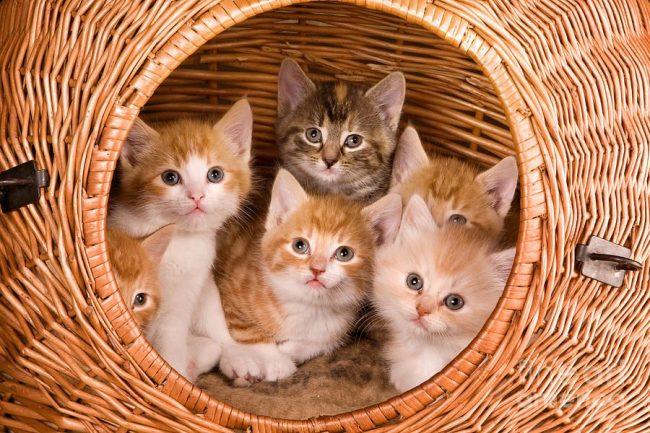 Задача хозяина - организовать удобное родильное место для кошки