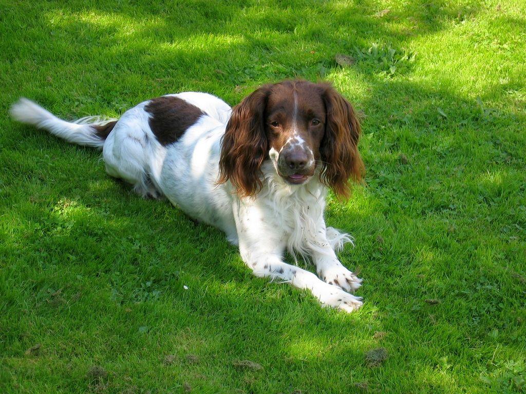 как давать таблетку от глистов собаке каниквантел