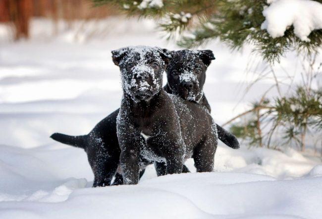 Специалисты рекомендуют бегать с собаками по глубокому снегу, давать им плавать в водоемах в теплую погоду - эти упражнения хорошо тренируют мышцы