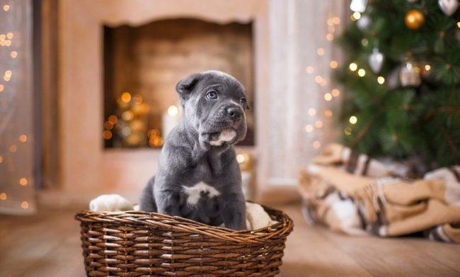 Устройте для щенка уютное спальное место, где ему будет комфортно и безопасно спать