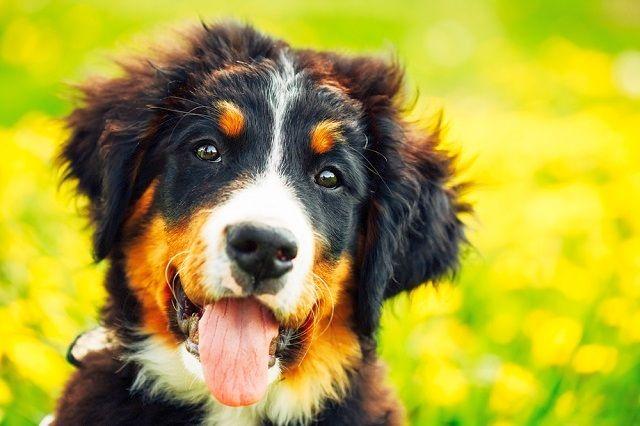 Не забывайте, что щенок - это еще ребенок. Помимо изнурительных тренировок, нужно уделять время играм и шалостям