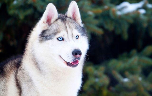 Чего только стоят эти голубые бездонные глаза!