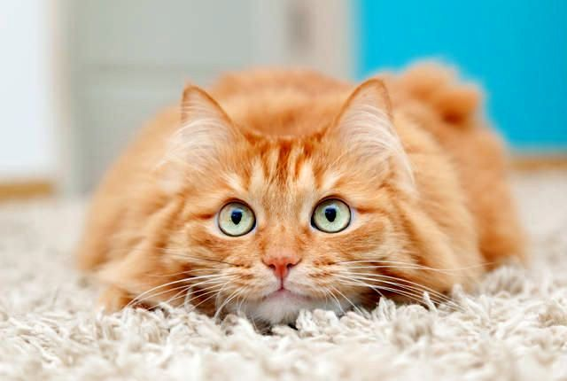 Рыжие коты, обладают они супер-способностями или нет, всегда дарят хорошее настроение всем окружающим