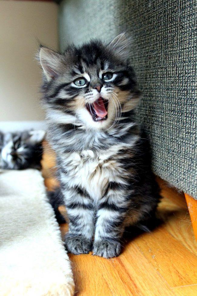 Здоровый котенок должен быть активным и веселым