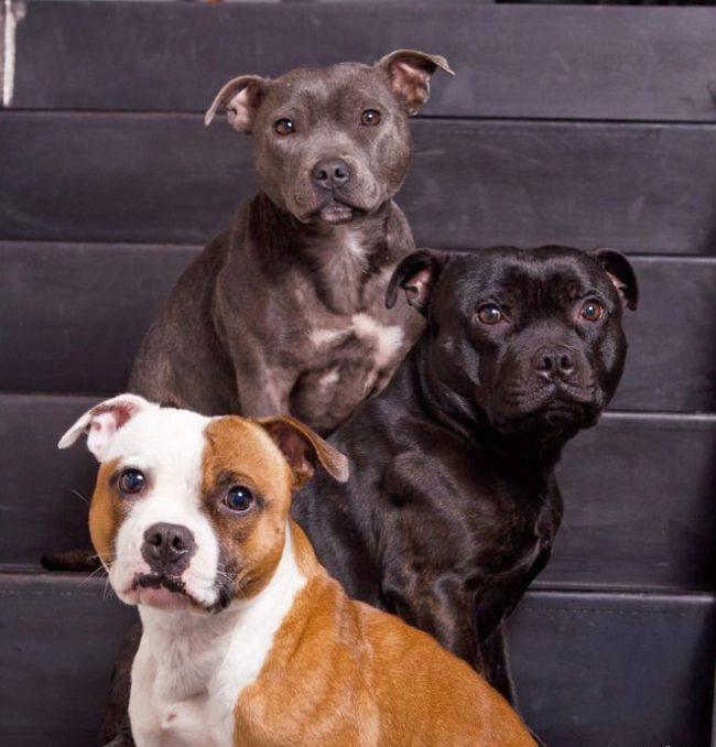 Если вы планируете дрессировать собаку самостоятельно, стоит приобретать 2-5-месячных щенков, именно в этом возрасте они легче всего поддаются дрессировке