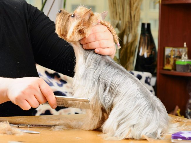 Во время стрижки в салоне хозяин должен находиться в другой комнате, чтобы собака на него не отвлекалась и не дергалась