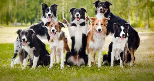 Потратьте немного времени на своего питомца, зато потом хорошо выдрессированная собака будет приносить вам только радость