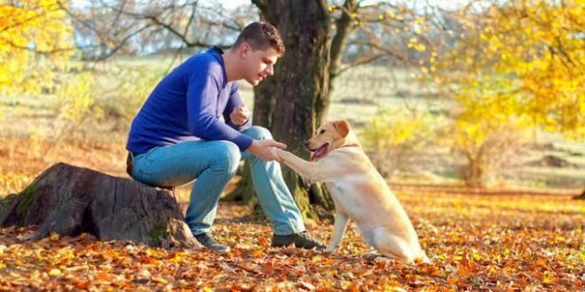 """На обучение собаки распространенной команде """"дай лапу"""" уходит буквально несколько дней"""