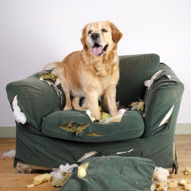 Слово «Нет» должно стать командой. Собаке необходимо понять, что вам нравится не все, что она делает. Говорите слово «Нет» твердо, но не переходите на крик