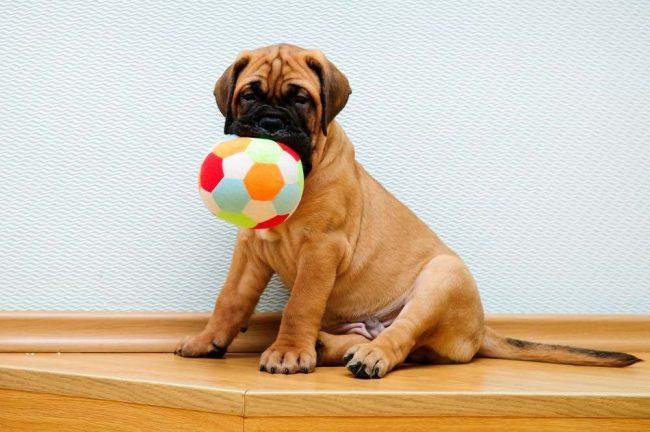 Взрослую собаку практически невозможно приучить к месту, а если у вас и получится, то потратить на это придется немало времени. Лучше начинать с малого возраста и не позволять щенку находится в квартире везде, где ему угодно