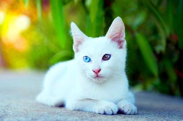 Уход за белым котом