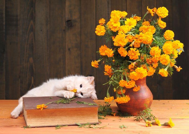 Белая кошка (фото): особенности характера, уход за белоснежной красавицей