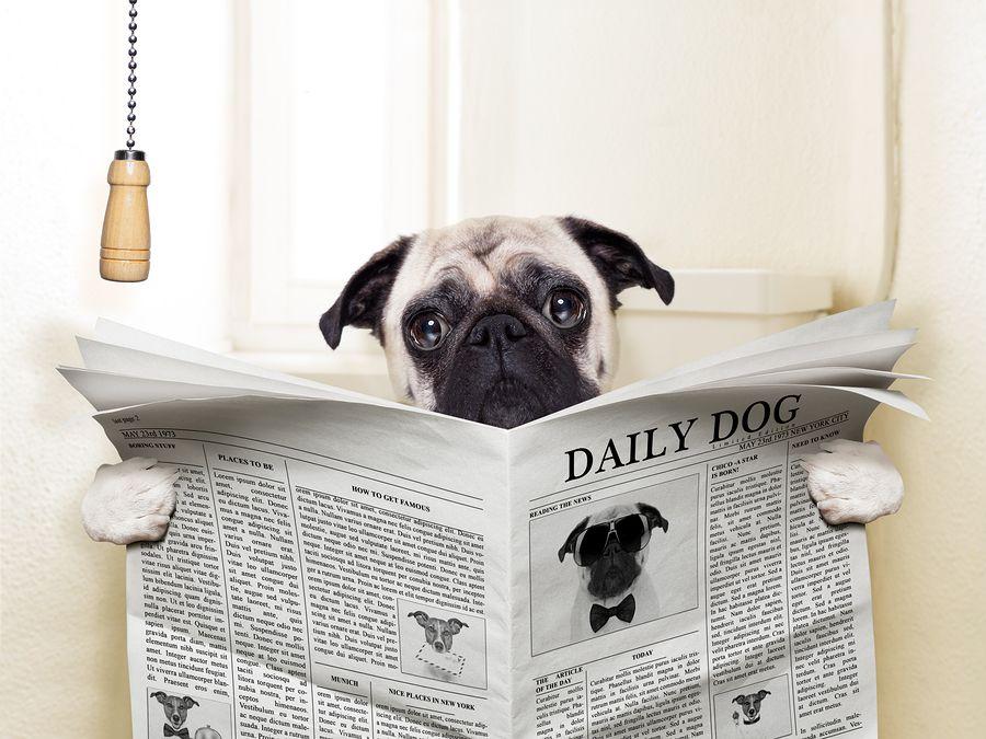 Что делать если у собаки понос: причины поноса у собаки и лечение поноса у собаки