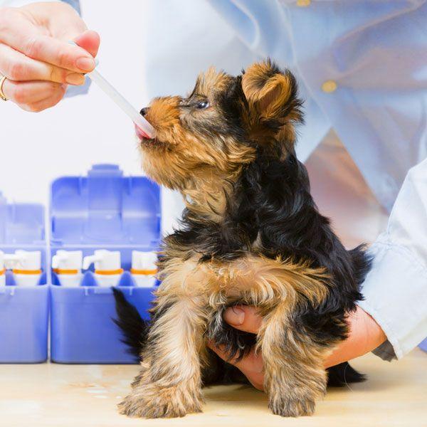 Квалифицированный ветеринар сможет назначить оптимальный вариант лечения для вашего питомца