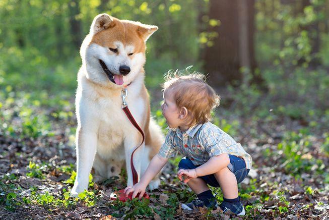 себуины порода собак