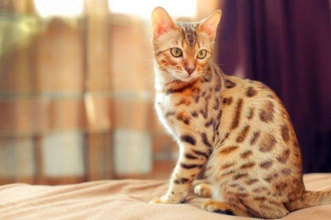 Нужно ли купать кошку? - ZooPicture ru