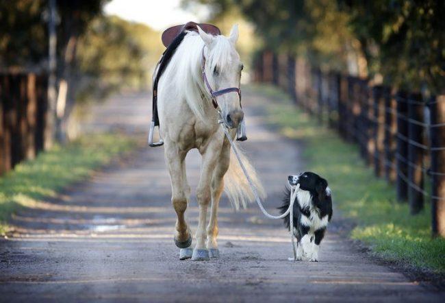 """Одна из самых умных собак в мире бордер колли занимает предпоследнее место рейтинга """"Самая дорогая порода собак в мире"""" и стоит 800 - 1 500 дол."""