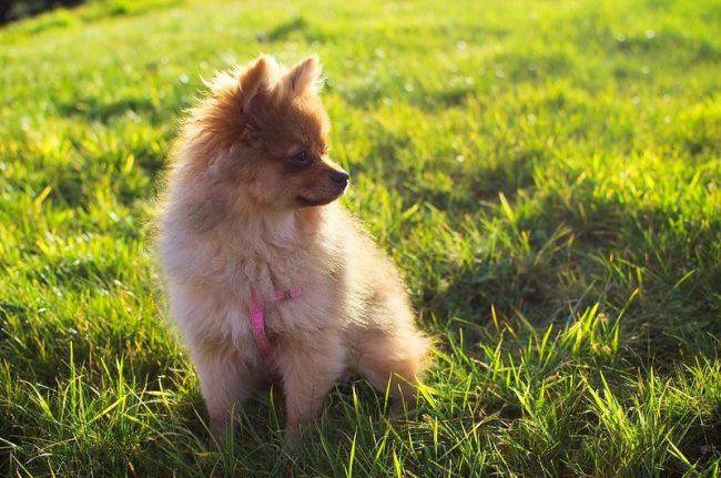 Маленькая лисичка с красивой шубкой заслуживает всяческих комплиментов