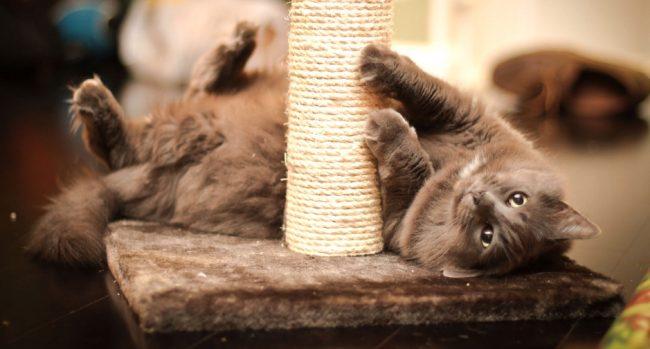 Когтеточки для кошек своими руками