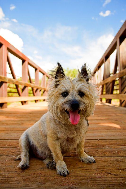 наказаниям или повышению тона эти собаки очень чувствительны. Их нельзя дразнить, не стоит даже кричать. Иначе они могут стать очень непослушными