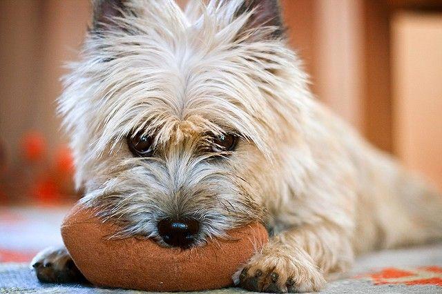 Лучше, если собака будет сопровождать владельца во время занятий спортом. Подходит туризм, бег, велоспорт, даже плавание. Только к нагрузкам собаку нужно приучать постепенно