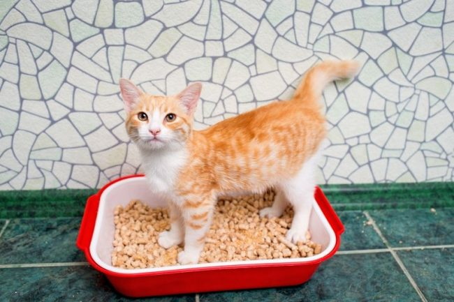 Перед тем, как принимать решение о том, что купить – туалеты для кошек закрытые или открытые, – необходимо обратить внимание на материал изготовления, гладкость поверхности, размер и форму
