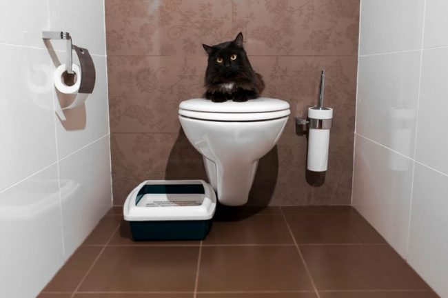От правильности выбора туалета для кота зависит комфорт вашего с ним совместного проживания