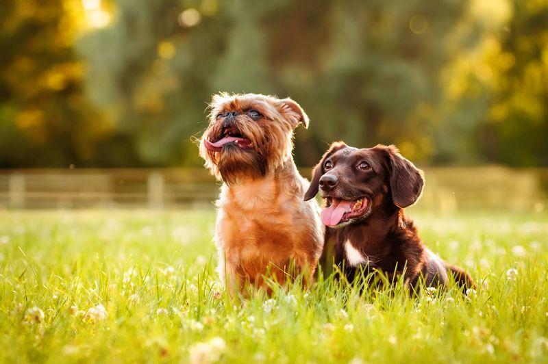 Лишай у собак лечение